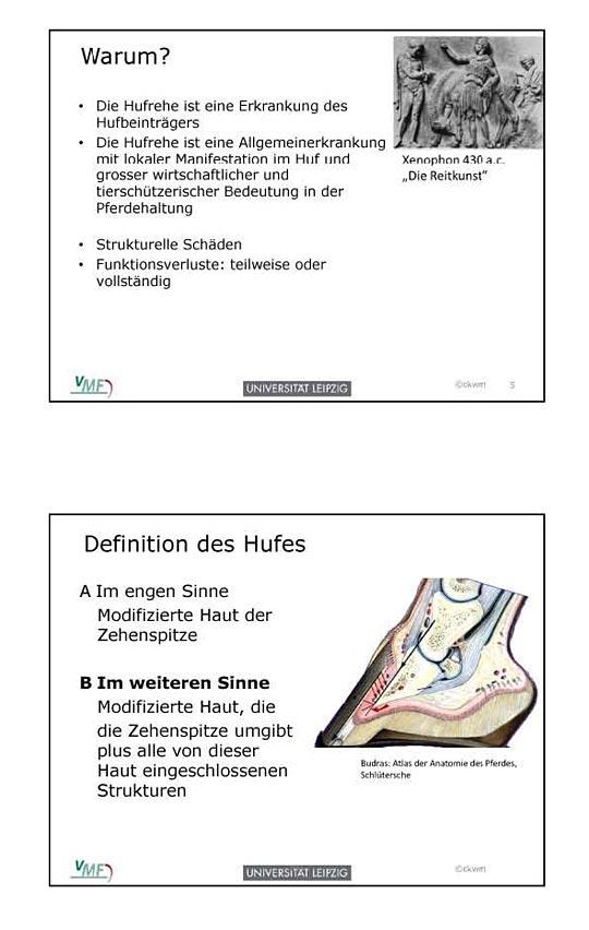 Die funktionelle Anatomie des Hufbeinträgers (Prof. Dr. Christoph ...